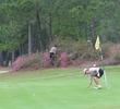 tour 18 azalea bushes
