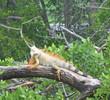 Crandon Park Golf Course - Wildlife