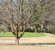 Jefferson Country Club - Trees