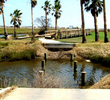 Moody Gardens Golf Course - Bridge