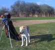 Jimmy Clay Golf Course - Kerby the dog