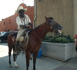 Fort Worth cattle driver