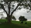 Big Island Country Club - wildlife