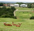 Highland Lakes Golf Course - fawns