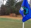 Bear Creek Golf Club - hole 18