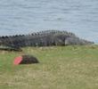 Sandhill Crane Golf Club - hole 18