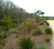 Bonita National - conservation area