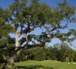 The Wilderness golf course - 3rd green
