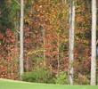 Coastal Pines Golf Club - Fall Colors
