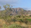 Sanctuary Golf Course - Desert