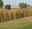 Cypress Golf Course - Marsh
