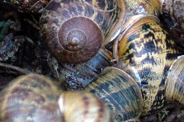 If you chose watching snails copulate as opposed to watching the Masters, you chose correctly.