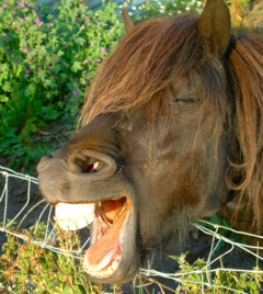 We admit it, at the Golfer Supremacy Rankings, we like horsing around.